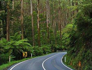 Black Spur Scenic Drive